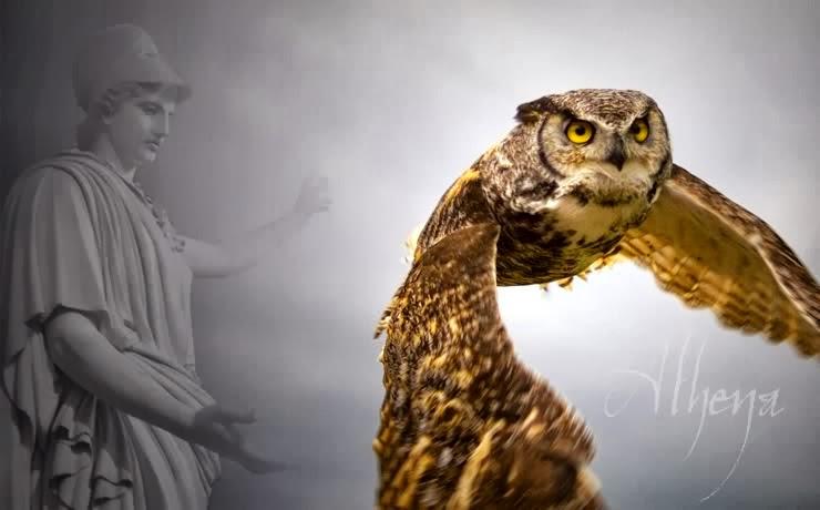 Athena-owl